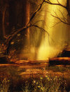 Fantasy scenery background in the woods Royalty Free Stock Photo