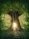 Fantasy tree house with light in the forest Stock Image