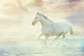 Fantasy white horse Royalty Free Stock Image