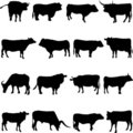Farm Animal Cattle Royalty Free Stock Photography