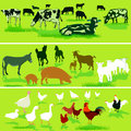 Farm animal illustrations