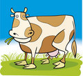 Farm animals: Cow Stock Photo