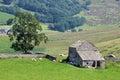 Farm animals field barn tree Mallerstang Cumbria Royalty Free Stock Photo