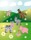 Farm animals on fields vector graphic image with walking in the Stock Photos