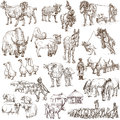 Farm animals full sized hand drawn illustrations around the world set no collection of an description Stock Photo