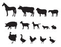 Farm animals set livestock collection of icons Royalty Free Stock Image