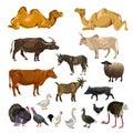 Farm animals set