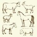 Farm animals. Vector drawing Royalty Free Stock Photo
