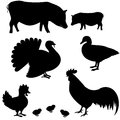Farm animals vector silhouettes set Stock Image
