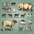 Farm animals vintage set (vector) Royalty Free Stock Photos