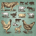 Farm animals vintage set (vector) Stock Photography