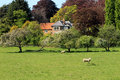 Farm in countryside with sheep green field Stock Photos