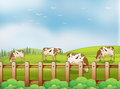 A farm with cows illustration of Stock Image