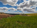 Farm, crop field. landscape with green grass. Spain agriculture.