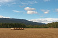 Farm field with bales. Royalty Free Stock Photo
