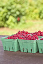 Farm Fresh Raspberries Royalty Free Stock Images