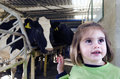 Farm girl in cow milking facility peria nz july with cows a on july the income from dairy farming is now a major part of the new Royalty Free Stock Images
