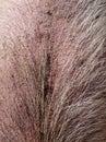 Farm: hairy pig skin Royalty Free Stock Photo