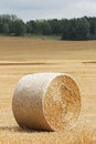 Farm hay harvest roll of golden in field vertical format Royalty Free Stock Photography