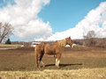 Farm horse out in the pasture on a beautiful day Royalty Free Stock Photography