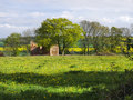 Farm house dilapidated image of building field of dandelions in foreground blue sky sunny Stock Photos