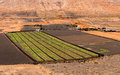 Farm in lanzarote canary islands food crops growing volcanic soil arid conditions on a Royalty Free Stock Image