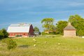 Farm With Sheep Royalty Free Stock Photography