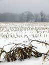 Farm: snowy corn field Stock Photos