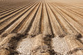 Farm soil rows prepared with parallel of dirt ready for planting Royalty Free Stock Photography