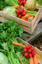 Farm vegetable market Royalty Free Stock Photo