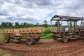 Farm wagons wooden used to transport crops and people from the fields to the homestead in rural virginia Royalty Free Stock Images