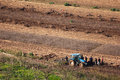 Farm workers at the field. Obidos. Portugal Royalty Free Stock Photo