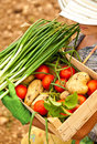Farmer carrying chest of vegetables Royalty Free Stock Photos