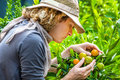 Farmer checking tangerines young in a country farm concepts of work outdoors contact with nature healthy food Stock Photo