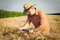 Farmer checks the wheat grain in the field Royalty Free Stock Photo