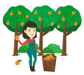 Farmer collecting oranges vector illustration.