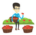 Farmer collecting tomatos vector illustration. Royalty Free Stock Photo