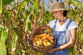 Farmer with corn Royalty Free Stock Photo