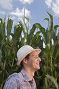 Farmer in a corn field Stock Photo