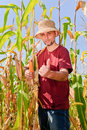Farmer in the corn field thumb up Stock Image