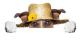 Farmer dog happy hiding behind blank banner Royalty Free Stock Image