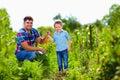 Farmer family harvesting vegetables in garden their Royalty Free Stock Image