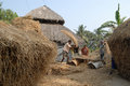Farmer family a thrashing paddy at their home in the remote village of west bengal Stock Image