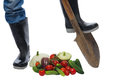 Farmer feet on the bottom of the shovel and scattered Royalty Free Stock Photo