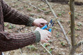 Farmer hands cuts with pruning shears fruit trees in garden Royalty Free Stock Photo