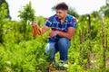 Farmer harvesting carrots in vegetable garden young Stock Photo