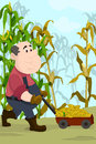 Farmer harvesting corns a vector illustration of happy in a field Stock Photo