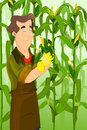 Farmer harvesting corns a vector illustration of happy in a field Royalty Free Stock Image