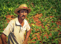 Farmer on his tobacco field vinales cuba february unidentified february most of in famous cuban cigars comes from small Stock Image