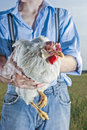 Farmer holding chicken Royalty Free Stock Photo